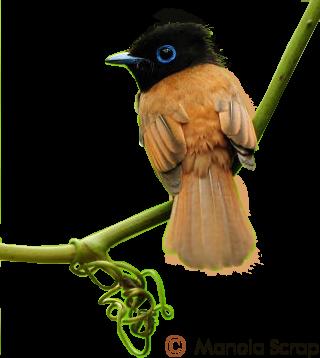 Tubes d'oiseaux page 1