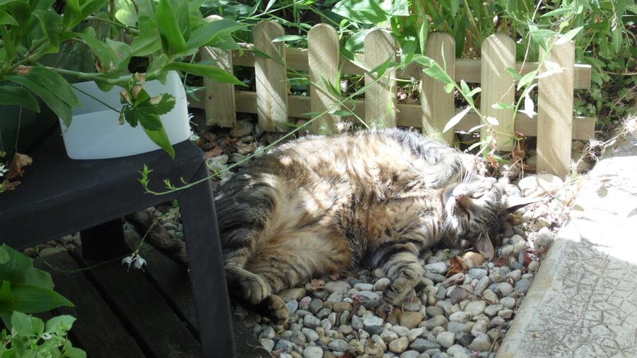 Dans mon jardinet !