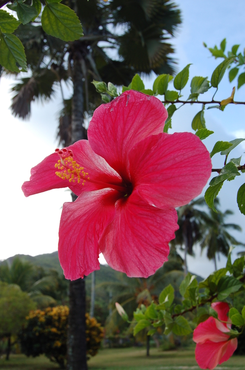 Une pépite aux Seychelles
