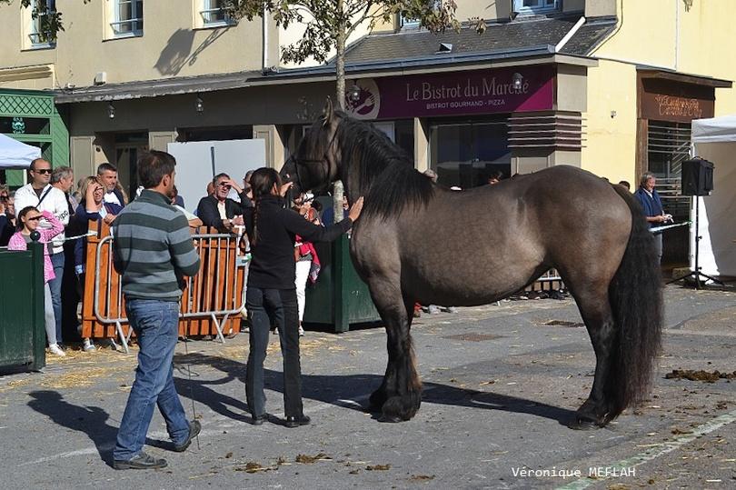 Rambouillet : La Saint Lubin-les 15ème Comices agricoles : Concours chevaux de trait