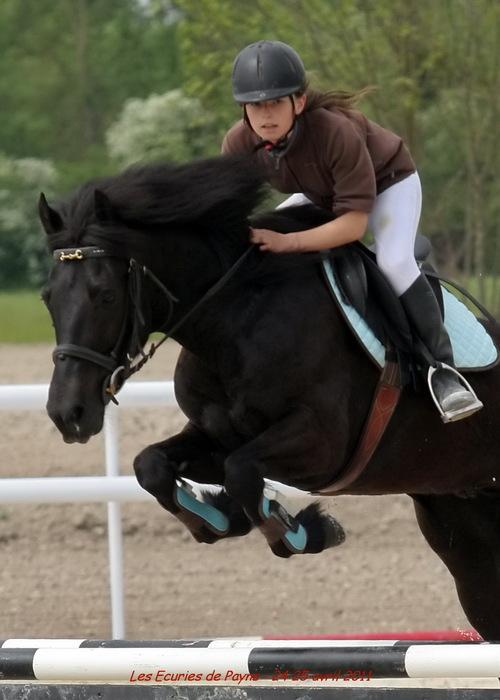 chevaux et chien
