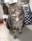 Visites pour chats à domicile Nantes quartier Talensac