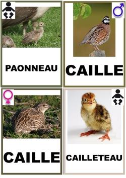 Les noms des oiseaux de la ferme