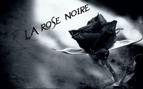 Belles Roses Noires