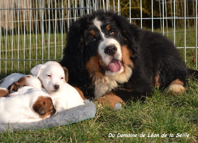 Nos chiens vivent en parfaite Harmonie