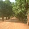 manguiers-bafoulabé