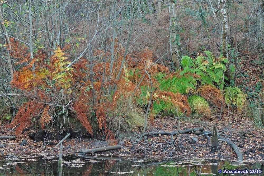Reflets et lumières d'automne au lac du Bousquey - 5/6