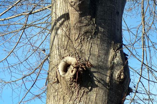 Des troncs d'arbres