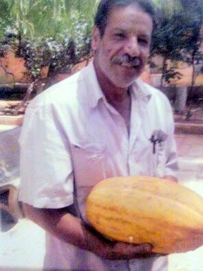 """Résultat de recherche d'images pour """"Le melon de Laghouat"""""""