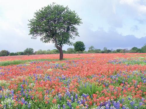 La beauté du printemps