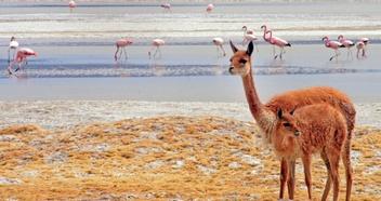 Observation de la faune et de la flore | Chile Travel