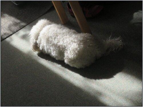 Pacha profite de la chaleur d'un rayon de soleil...