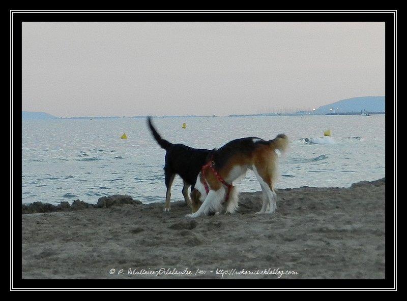 Gampo et Spok à la plage...