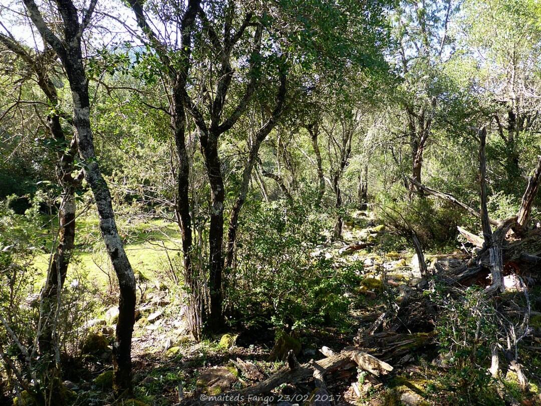 Forêt du Fango - Corse