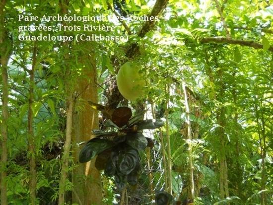 parc archéologique des roches gravées (trois rivière).j (3)