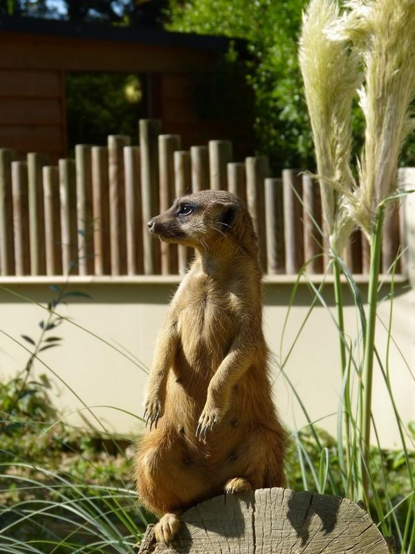 Zouuu, au Zoo d'Amiens