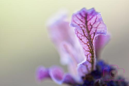 Dimanche fleuri ...