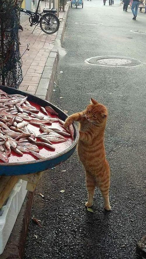 Pilaf de poissons