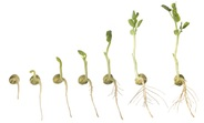 Les conditions de développement d'un végétal