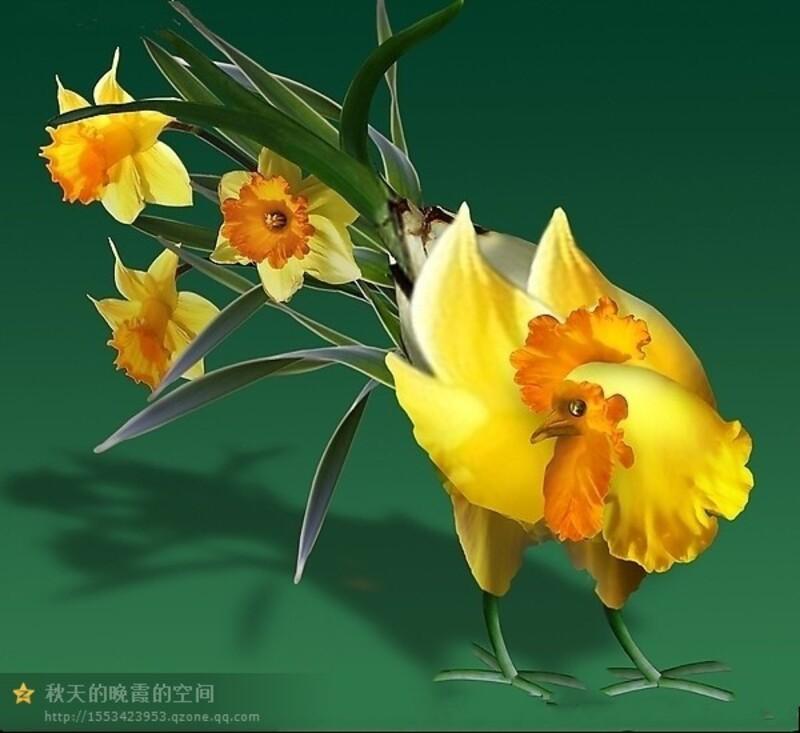 Des coqs en fleurs