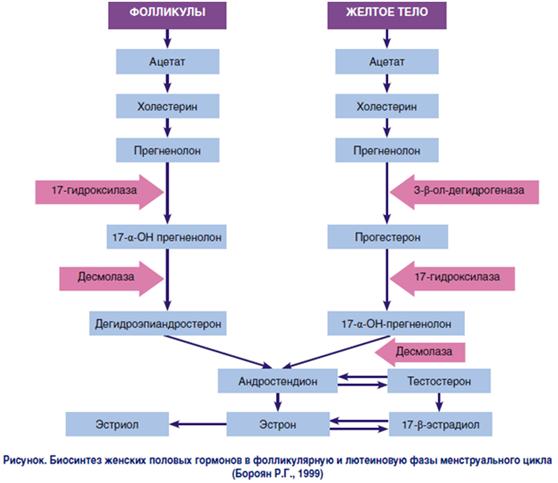 Влияние эстрогена на образование целлюлита
