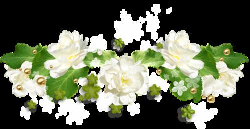Fleurs cultivées : Glycine