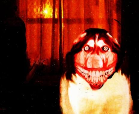 smile.dog (pour de vrai cette fois)