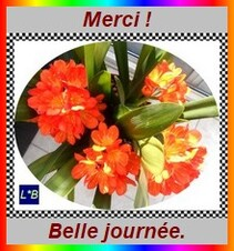 merci fleurs
