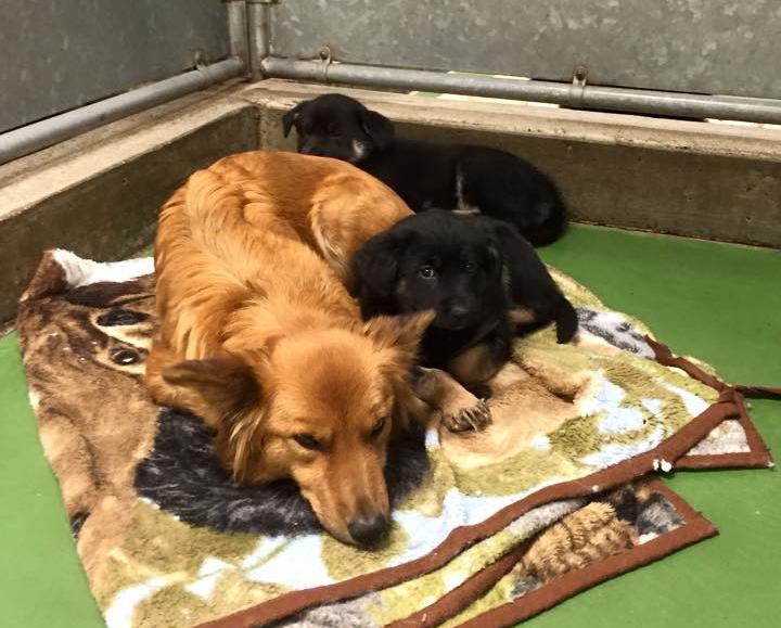 (-*♥*-) Une chienne s'échappe de sa cage pour réconforter deux chiots abandonnés et terrorisés