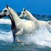 animaux_99827_jpg