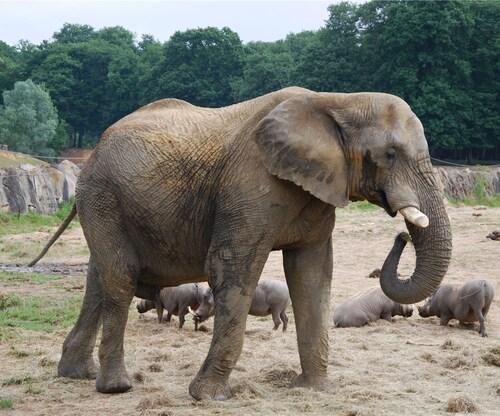 Safari parc de Thoiry...