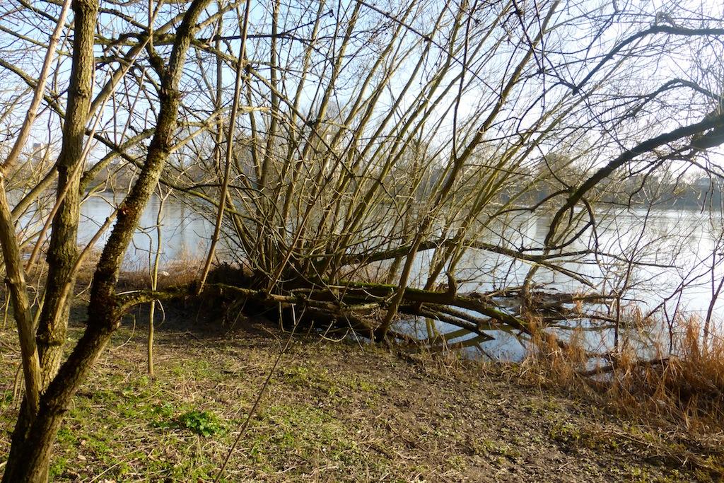 Balade au bord de la Loire