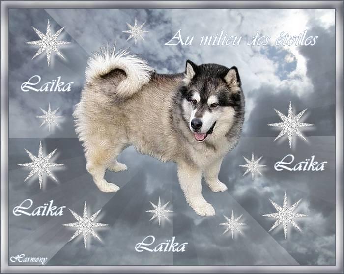 En hommage à ma Princesse adorée Laika