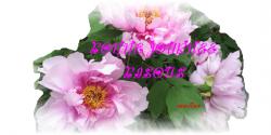 ♥De beaux Chrysanthèmes♥