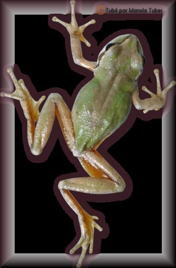 Tube grenouilles / Crapauds 2943