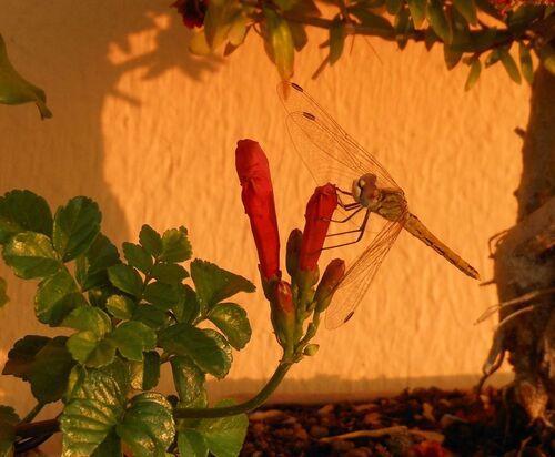 une curieuse sur fleur de bonsaï bignonne