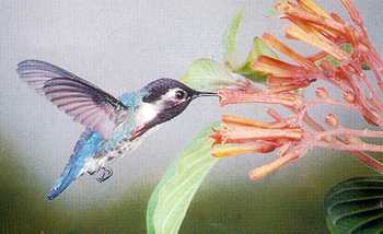 bee-hummingbird.jpg