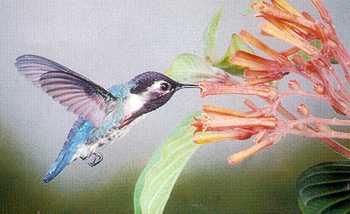 bee-hummingbird.jpg