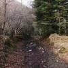 Contraste de végétation sur les bords du chemin de raccourci