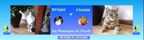 Les princesses de Nicole
