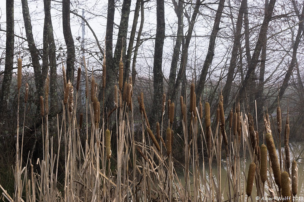 Et tant de brume sur l'étang - 2
