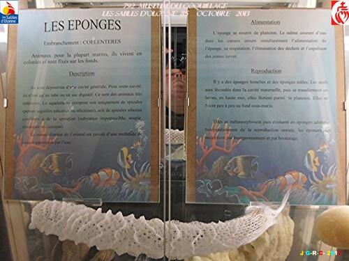 MUSEUM DU COQUILLAGE  10/16   vacances 10/ 2013  SABLES D'OLONNE    20/01/2014