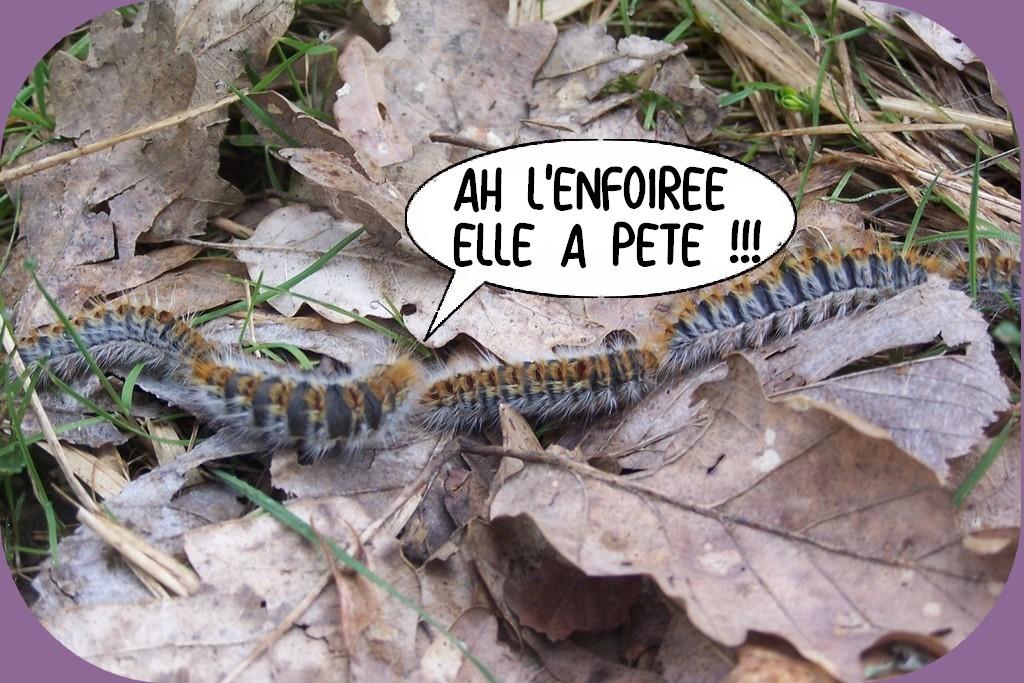 NOUVELLE PAGE D'HUMOUR