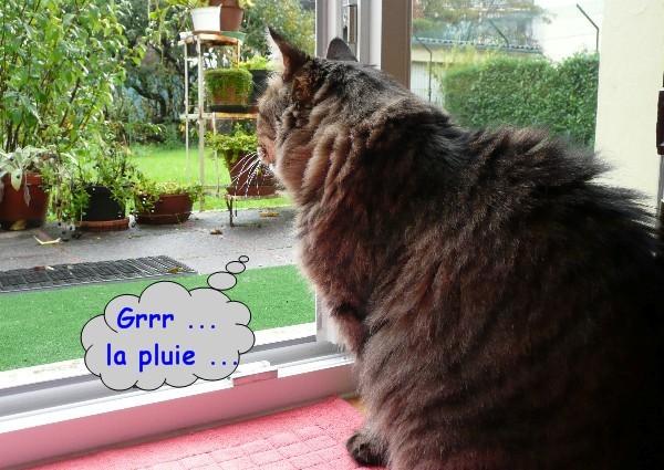 pluie-et-chats-02.JPG
