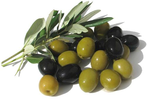 Vertus médicinales des légumes et des fruits : OLIVIER