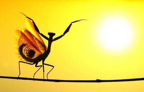 IMAGE : La danse de l'insecte