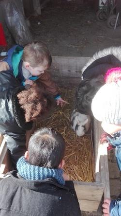 Encore des photos de la ferme...