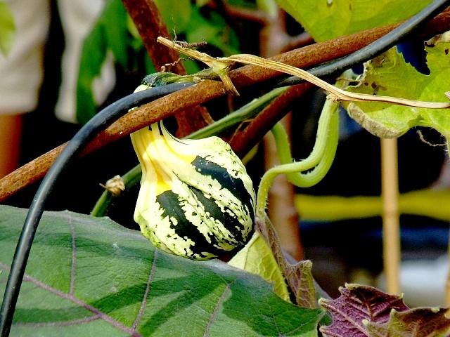 33 - Un jardin en ville Marc de Metz 2012