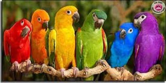 L'intelligence des oiseaux : des perroquets mentalists