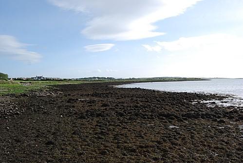 Oranmore---La-mer-a-maree-basse.jpg